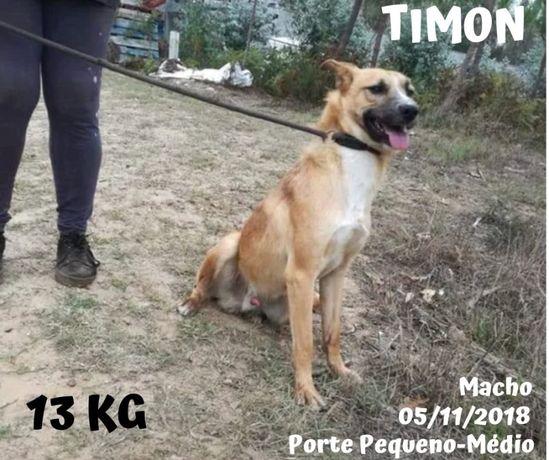 Cão Porte Pequeno-Médio (13kg) Para Adoção (Timon)
