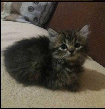Отдам котёнка в хорошие руки