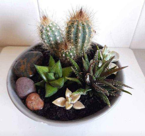 Mini- jardim em base de louça 8€