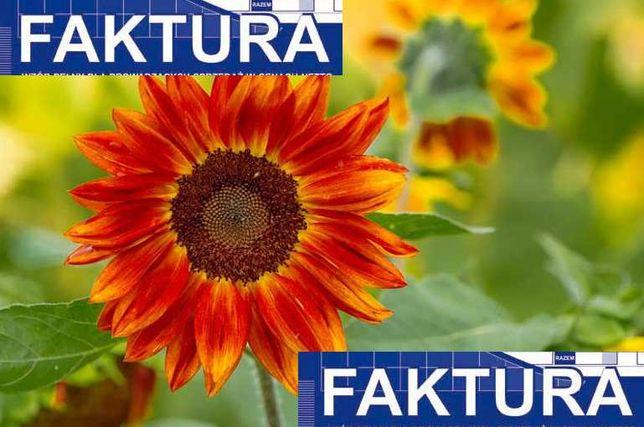 Słonecznik ozdobny kwiat cięty FAKTURA paszport rośliny