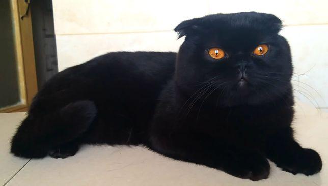 Вязка котов породистих