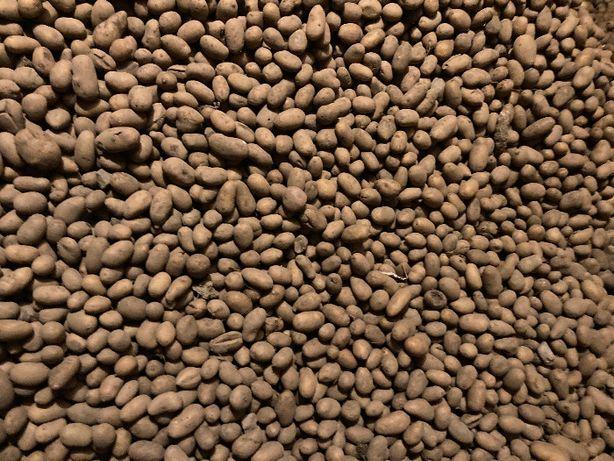 ziemniaki paszowe dla zwierząt