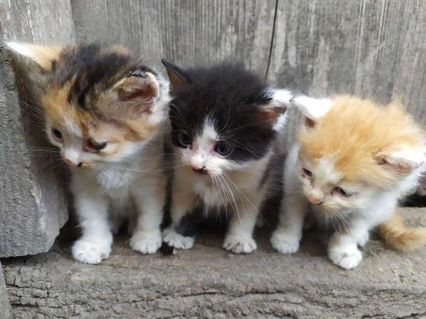 кошенята, котики, киця, безкоштовно