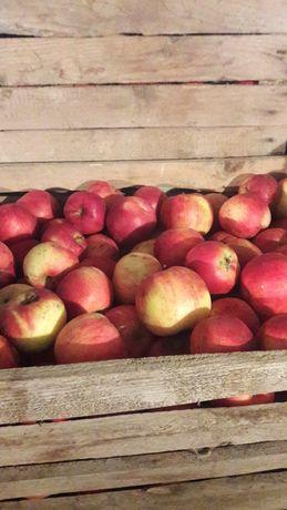 Продам не кроплені яблука.