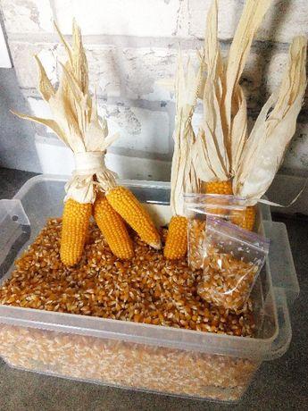 Семена мини кукурузы.