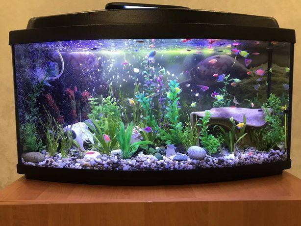 Продам действующий аквариум объемом на 100л с тумбой