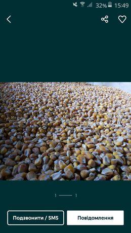 Зерно,товч,кукурудза
