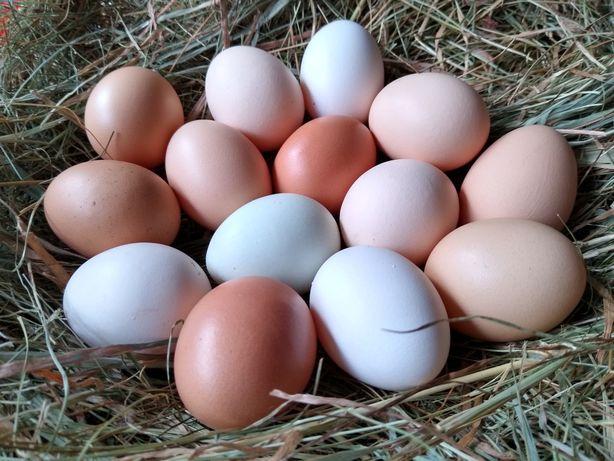 Wiejskie jaja, jajka od kur z wolnego wybiegu.