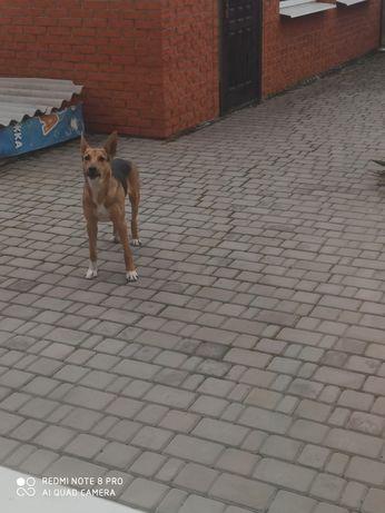 Собака ищет дом.