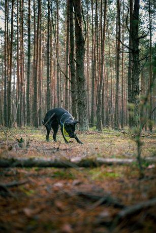 Psia sesja / Fotografia zwierzęca / Pupil w plenerze