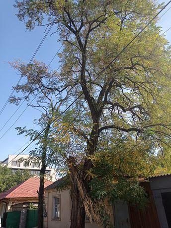 Спил деревьев валка деревьев удаление деревьев спил веток Уборка пня