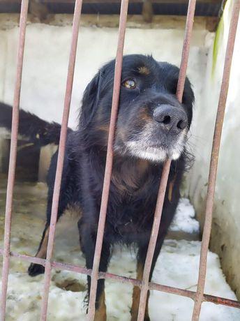 Cywil szuka domu !! Ile jedno psie życie może wytrzymać ?!