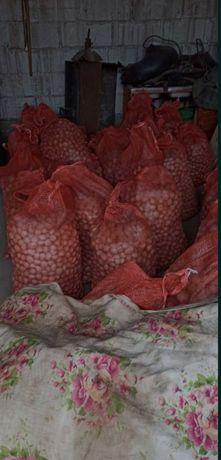 ziemniaki sadzeniaki rufolf (czerwone) i irga
