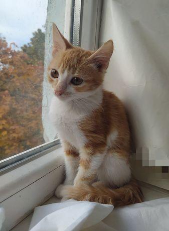 Отдам котят_ котята_ Степашка