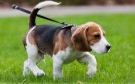 Вигуляю Вашу собаку