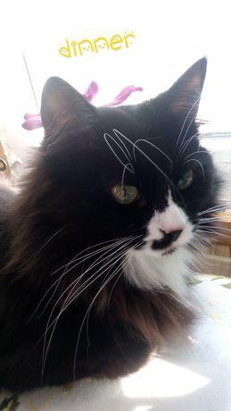 Ищу кошку, пропала дачи Самаровка