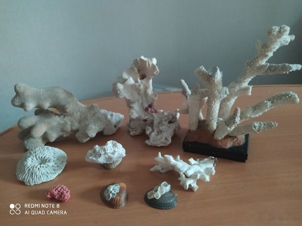 Натуральные кораллы для аквариума и декора. Коралл.