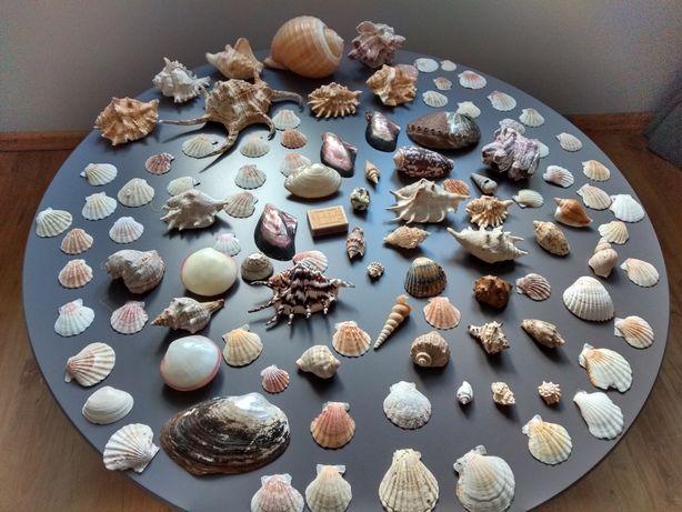 Muszle morskie- duży zestaw