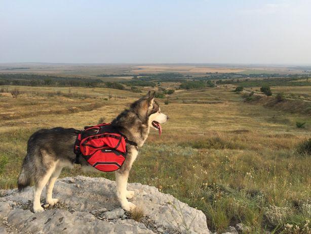 Шлейка-сумка для собаки