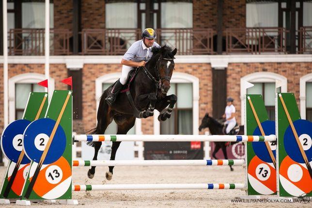 елитный, спортивный конь, лошадь,жеребец,кобыла