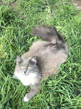 Пропала Кошка Вознаграждение !