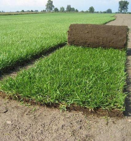 Trawa z rolki trawnik trawa w rolce zakładanie ogrodów