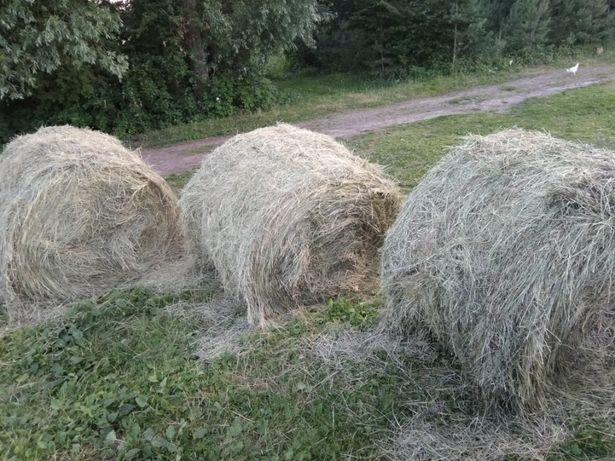 Продам сено в рулонах по 500 килограмм (есть опт)