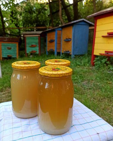 Naturalny miód pszczeli z własnej pasieki rzepakowy tegoroczny