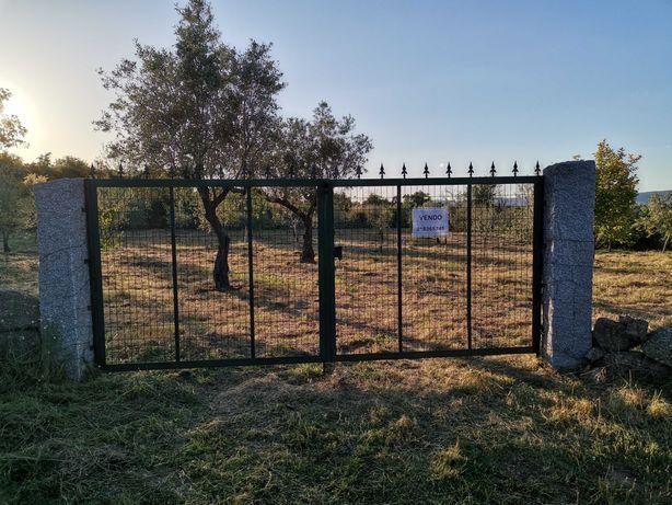 Terreno com oliveiras
