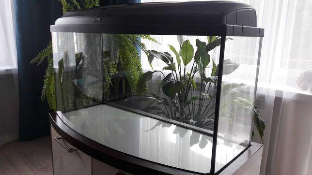Akwarium panoramiczne 112 litrów z szafką i pełnym wyposażeniem