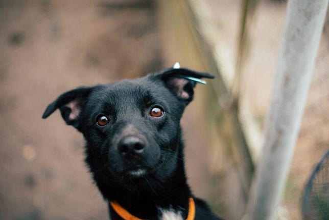 Майкл Скот небольшого размера собачка ищет новый дом (1 год)