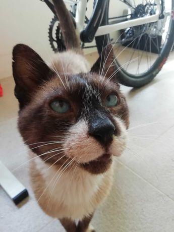 URGENTE!! Adoção de gato