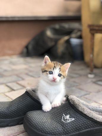 Отдадим в хорошие руки котёнка