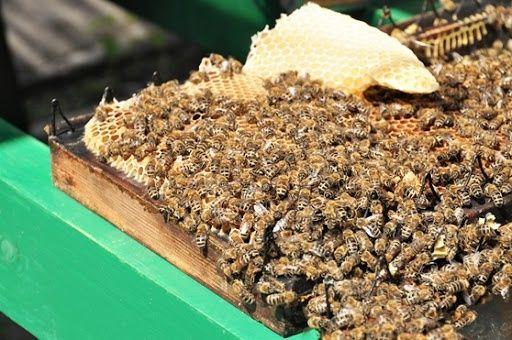 Miód pszczeli hurtowo