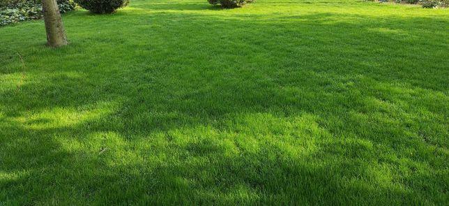 Trawnik z siewu już od 5zl/m2 Zakładanie ogrodów Glebogryzarka Trawa