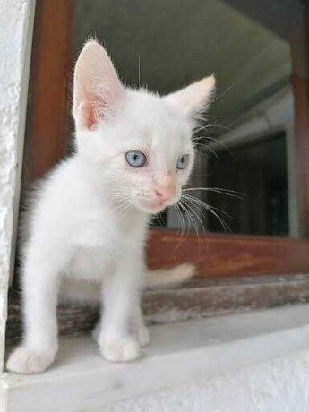 Gatinhos para adoção