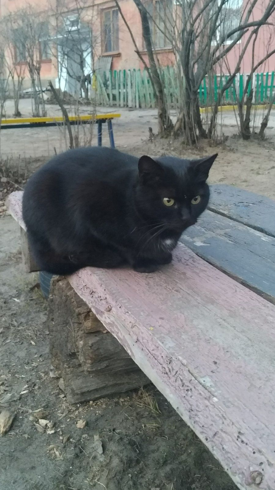 Отдам черную кошку ,2 года ,стерилизована