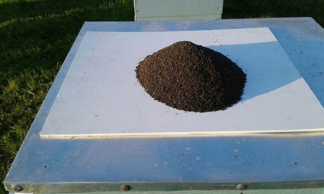 Продукт жизнедеятельности личинок восковой моли (ПЖЛВМ), восковая моль