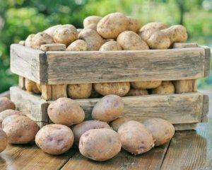 Продаю картоплю домашню