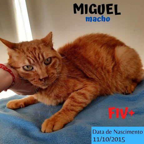 Gato Especial FIV Para Adoção (Miguel)