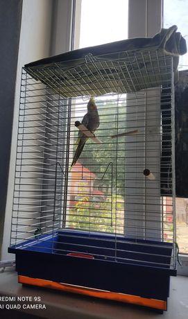 Попугай Корелла с большой клеткой