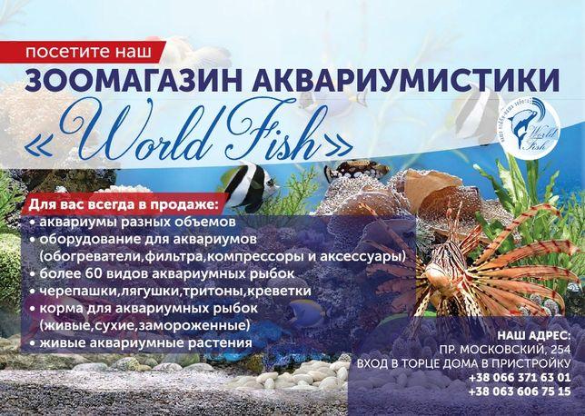 аквариумные рыбки скалярии,гуппи сомики,золотые рыбки, гурами,растения