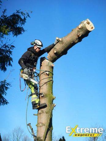 Wycinka drzew Legnica
