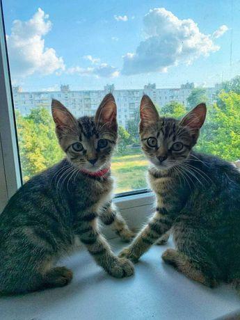 Милейшие котята ищут хозяев