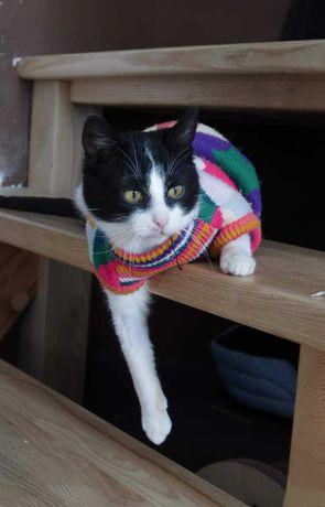 Kochany Manuel, kot do adopcji