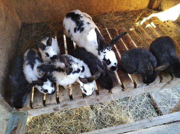 Кролики - продам