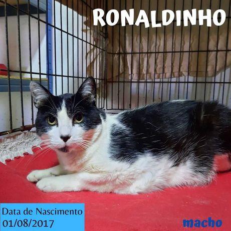 Gato Para Adoção (Ronaldinho)
