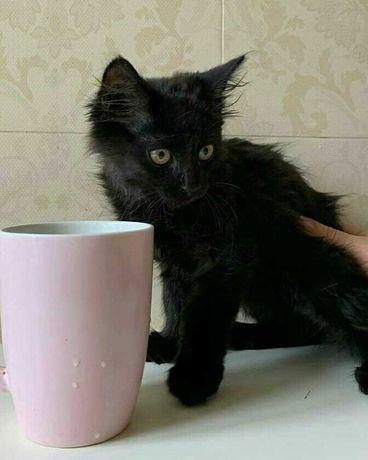 нужен дом спасенному котенку