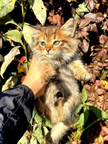 Ну очень красивая кошечка, около 2 месяцев, мёрзнет на улице, кому?