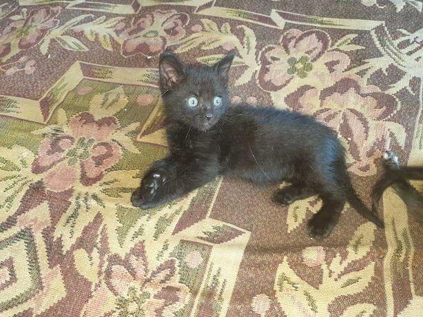 Гарнюні кошенятка в відповідальні ручки.(безкоштовно)